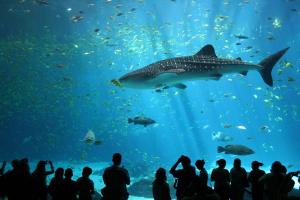world-aquarium